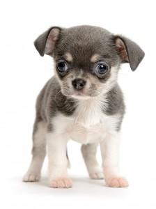 Dette billede er ikke taget i Fredericia by, det er købt som stock photo - men er det ikke bare en sød hund