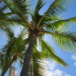 Rejseguide til Hawaii – The Aloha State