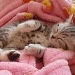 Kattekilling i lyserød plys