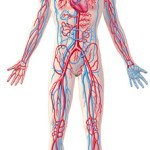 10 tegn på at du har dårlig blodcirkulation