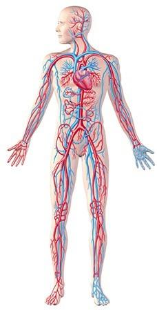 få bedre blodcirkulation