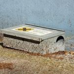 Sådan undgår du rotter i dit hjem